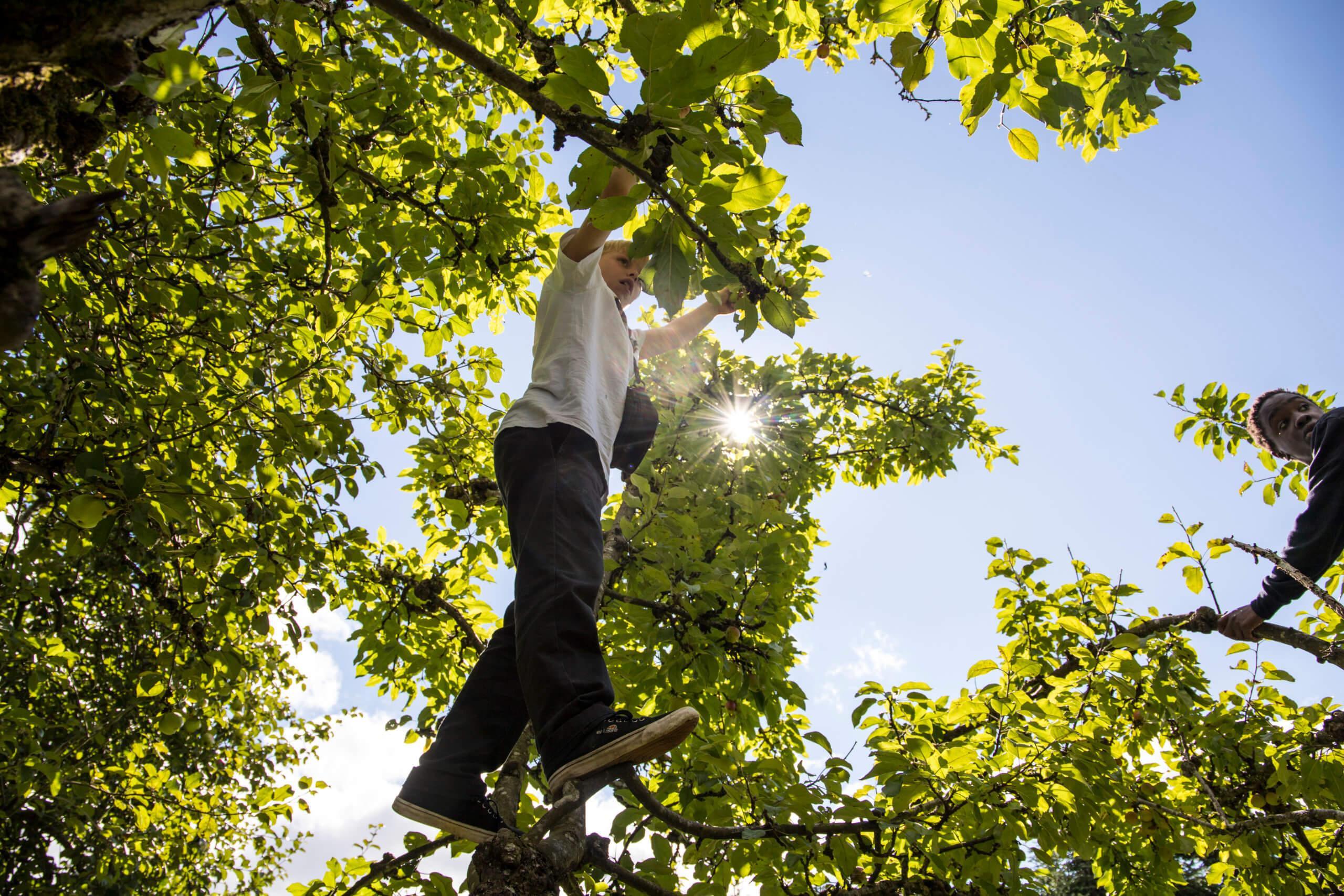 dreng i træ
