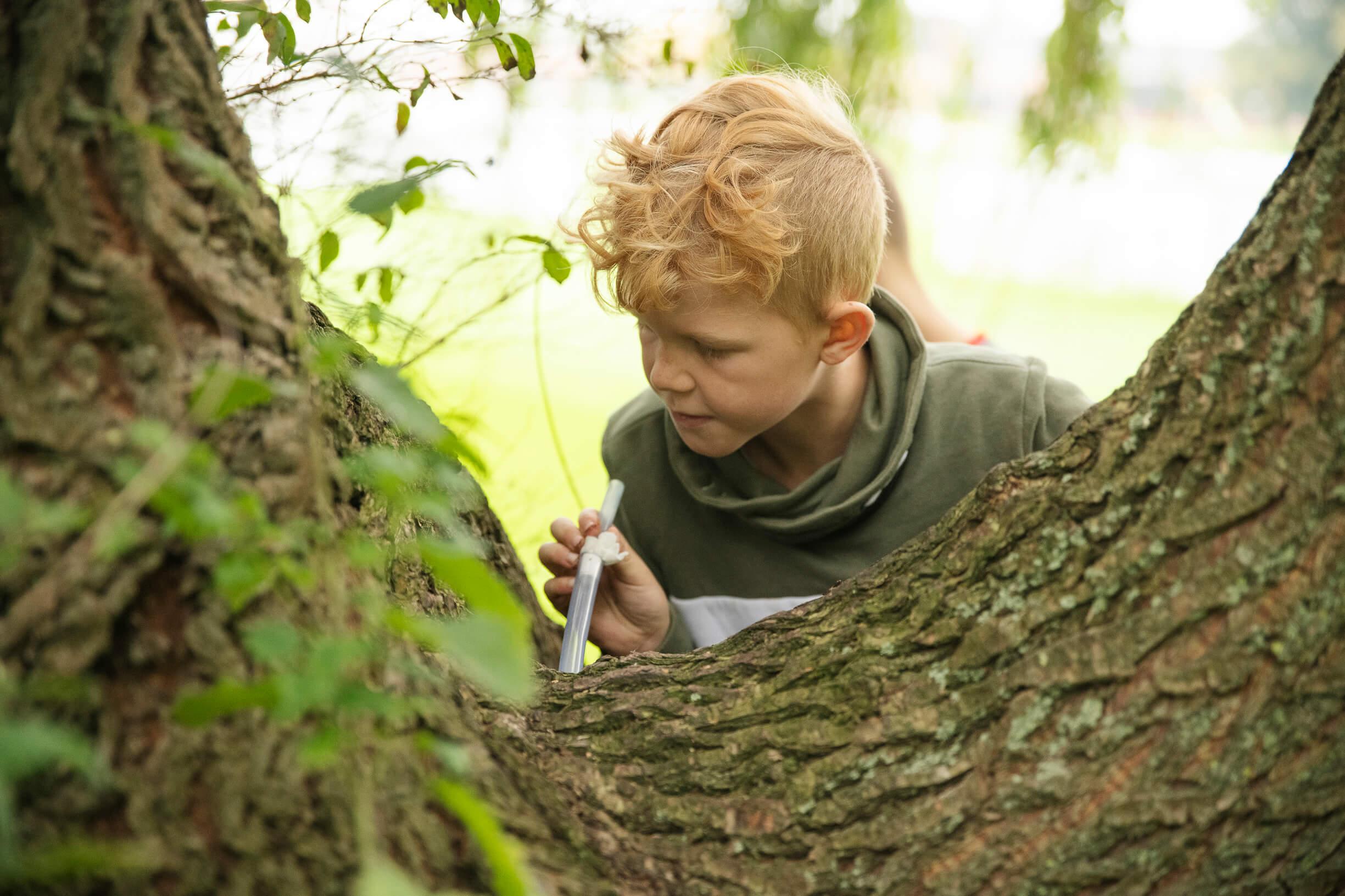 dreng bag træ